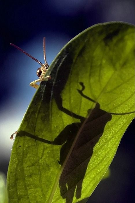 Grasshopper Pictures 9