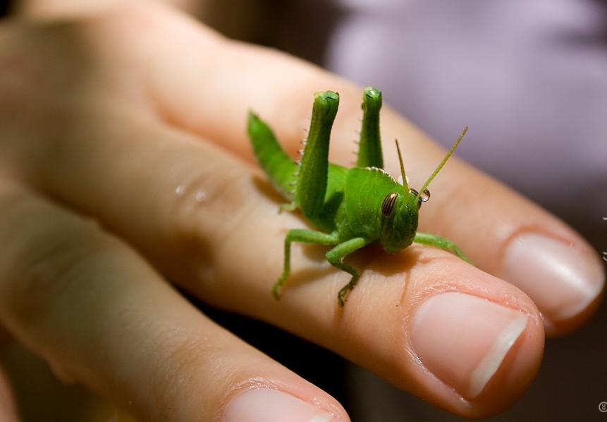 20 Awe-inspiring Grasshopper Pictures