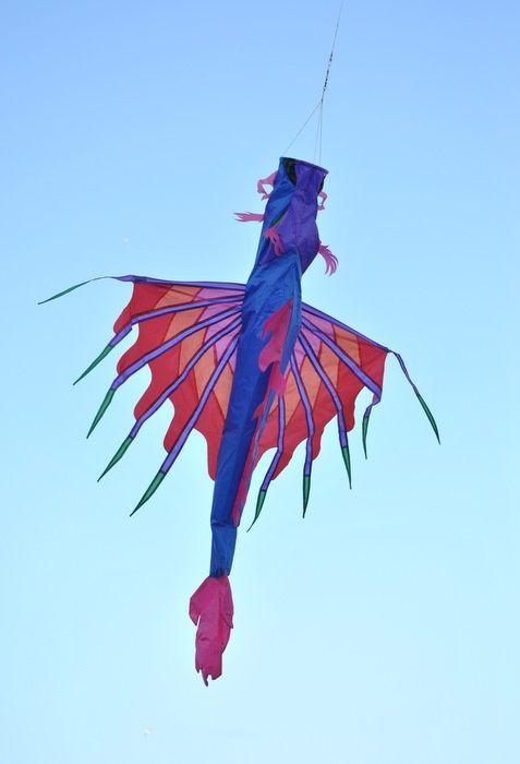 Kite picture 5