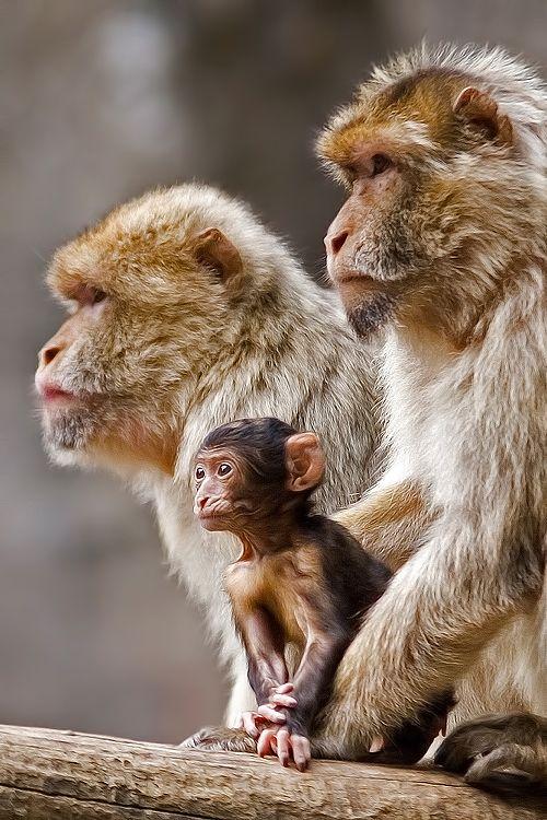 Monkey Pictures1