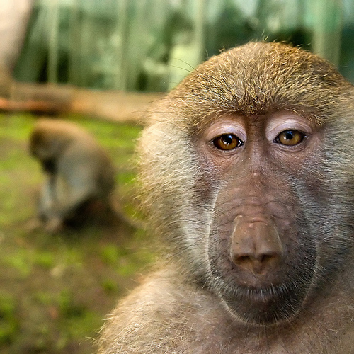 Monkey Pictures10
