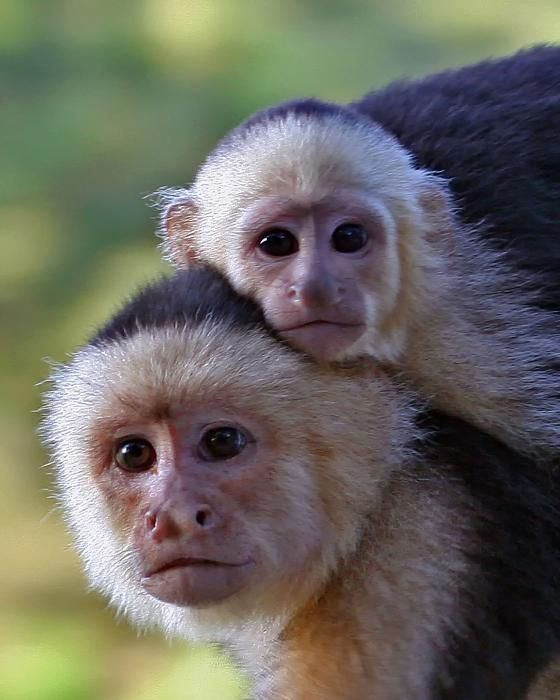 Monkey Pictures2