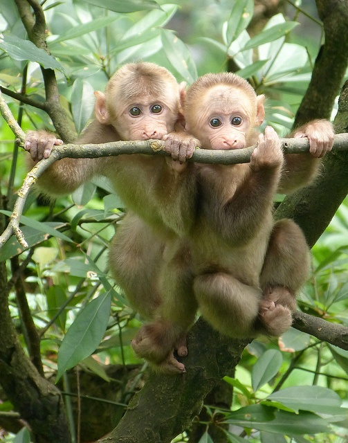 Monkey Pictures3