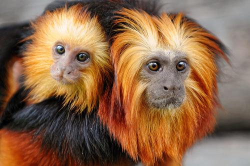 Monkey Pictures7