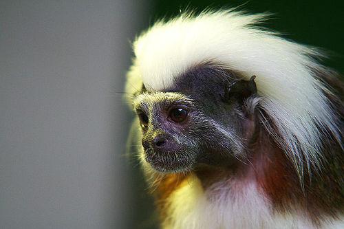 Monkey Pictures8