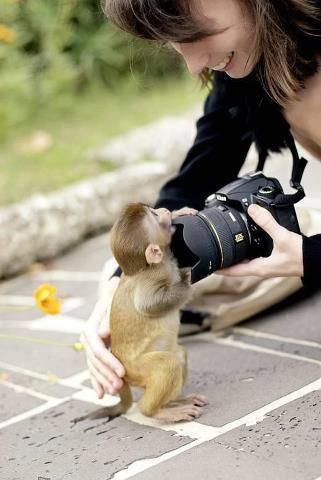 Monkey picture1