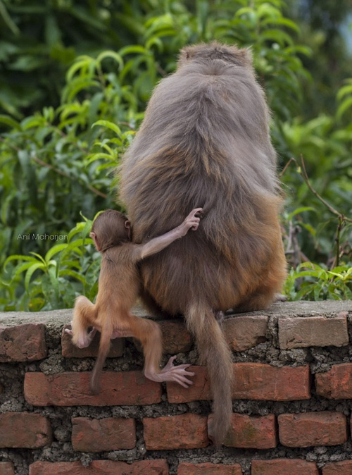 Monkey picture6