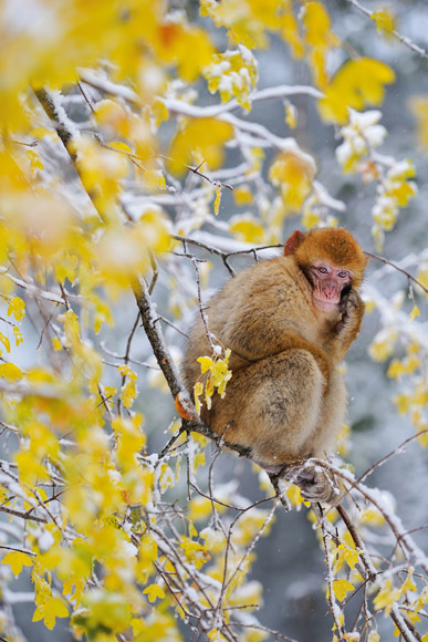 monkey picture9