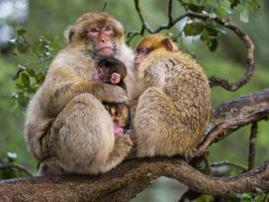 Top 20 Monkey Pictures