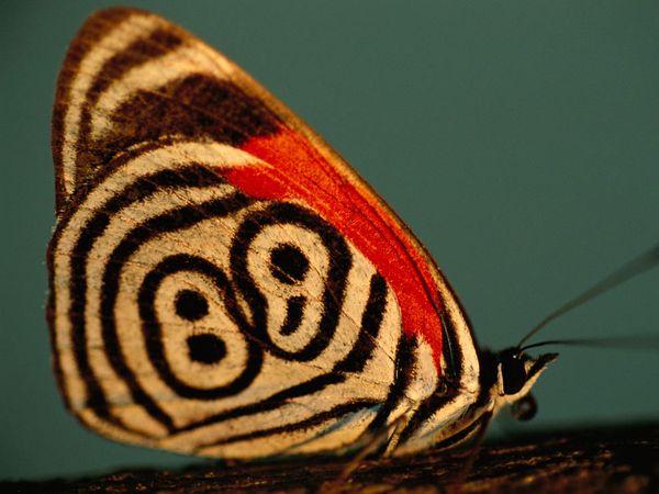 neglecta-sartore_Butterfly tattoo4