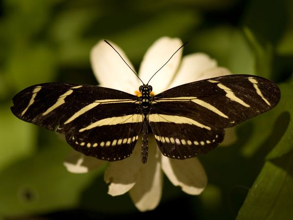 zebra-sartore_butterfly9