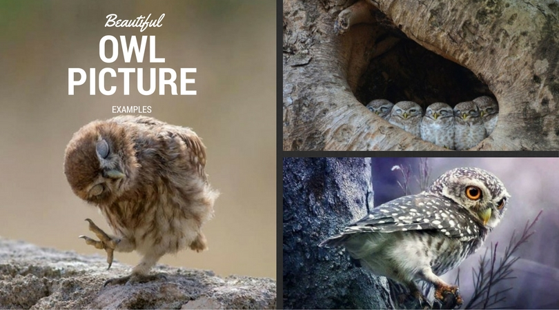 beautiful-owl-picture-examples