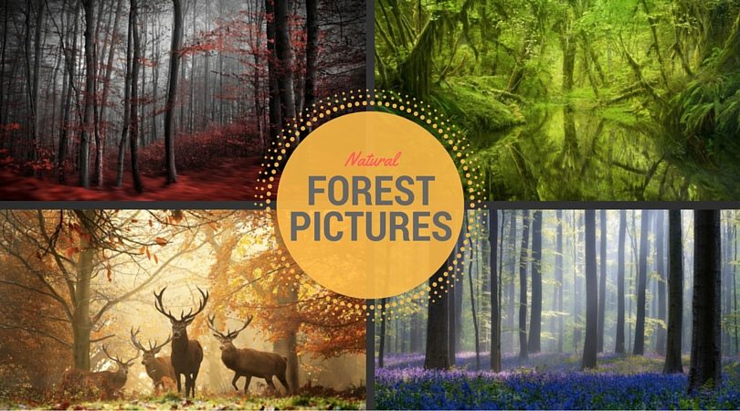 37 Natural Forest Pictures Example