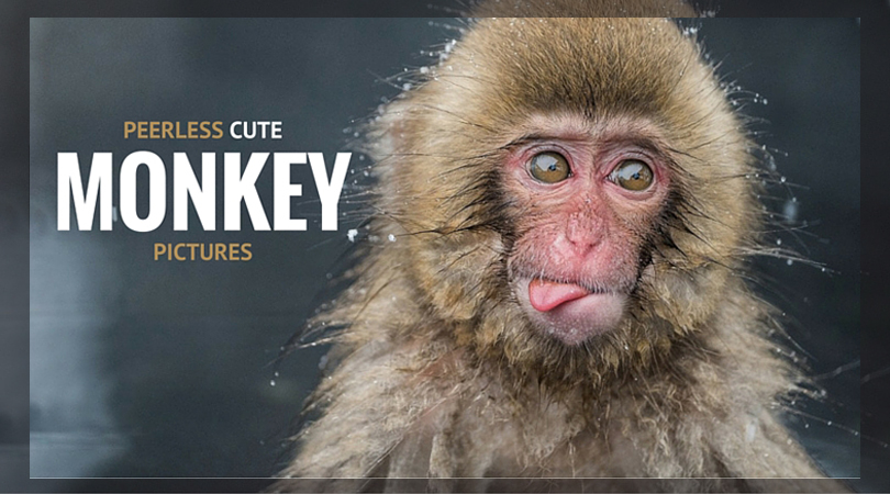 Peerless Cute Monkey Pictures