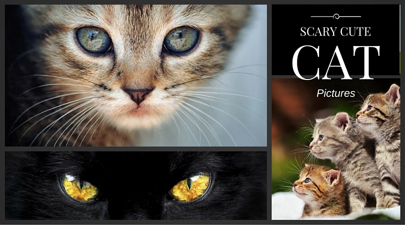 Scary Cute Cat Pictures