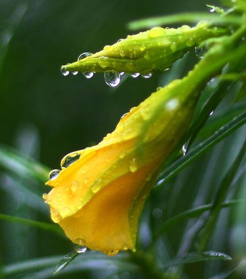 Rain photography 10