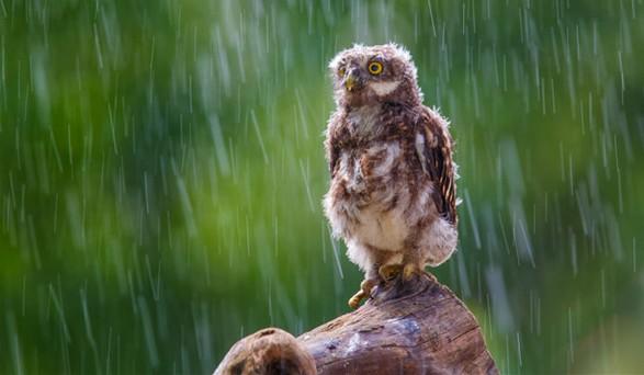 Rain photography 17