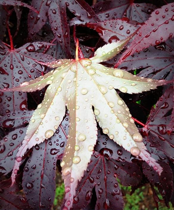 Rain photography 19