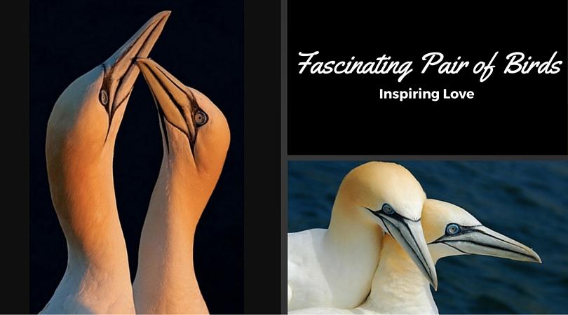Fascinating Pair of Birds
