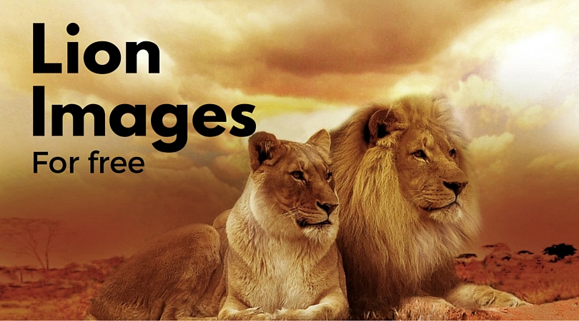 15 Exuberant Lion Images for Free