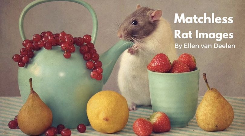 25 Matchless Rat Images by Ellen van Deelen