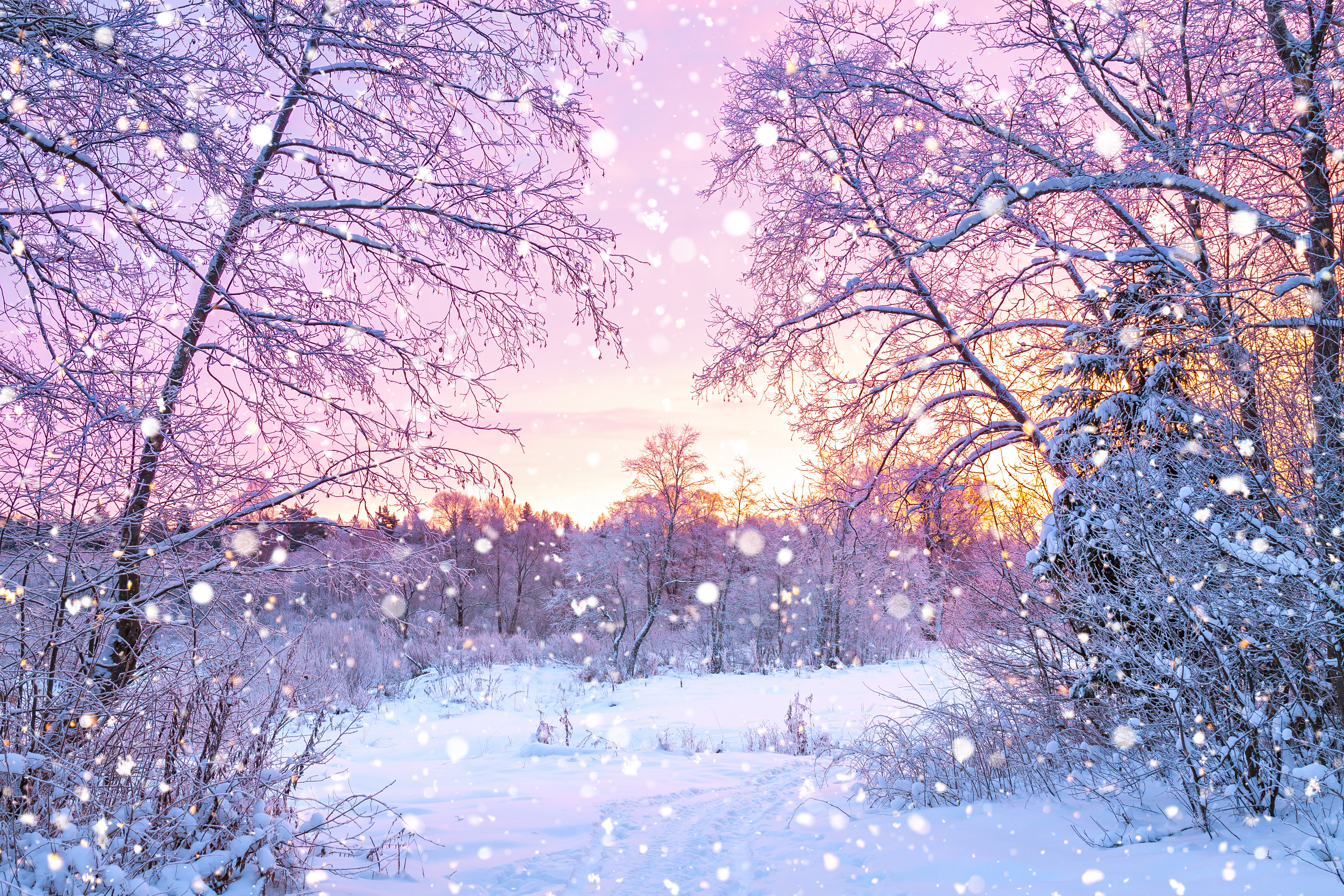 Forest trees sunrise winterly morning Nature wallpaper