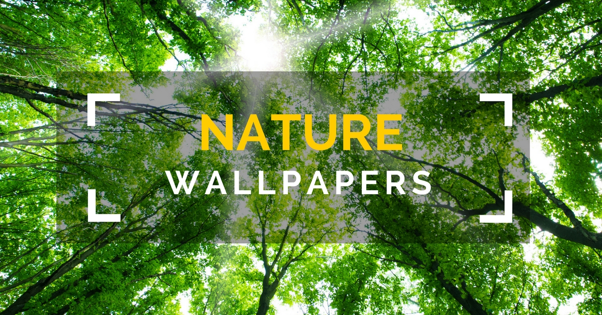 35 Most Beautiful Nature Wallpapers For Your Desktops