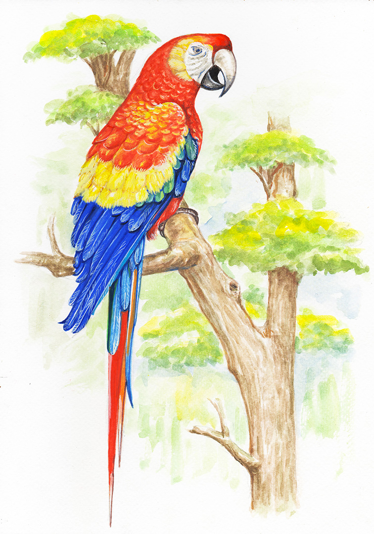 watercolor drawing of a tropical parrot